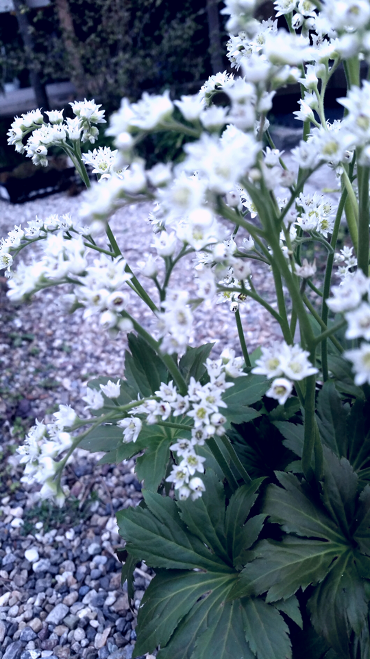 garden sanyasou spring
